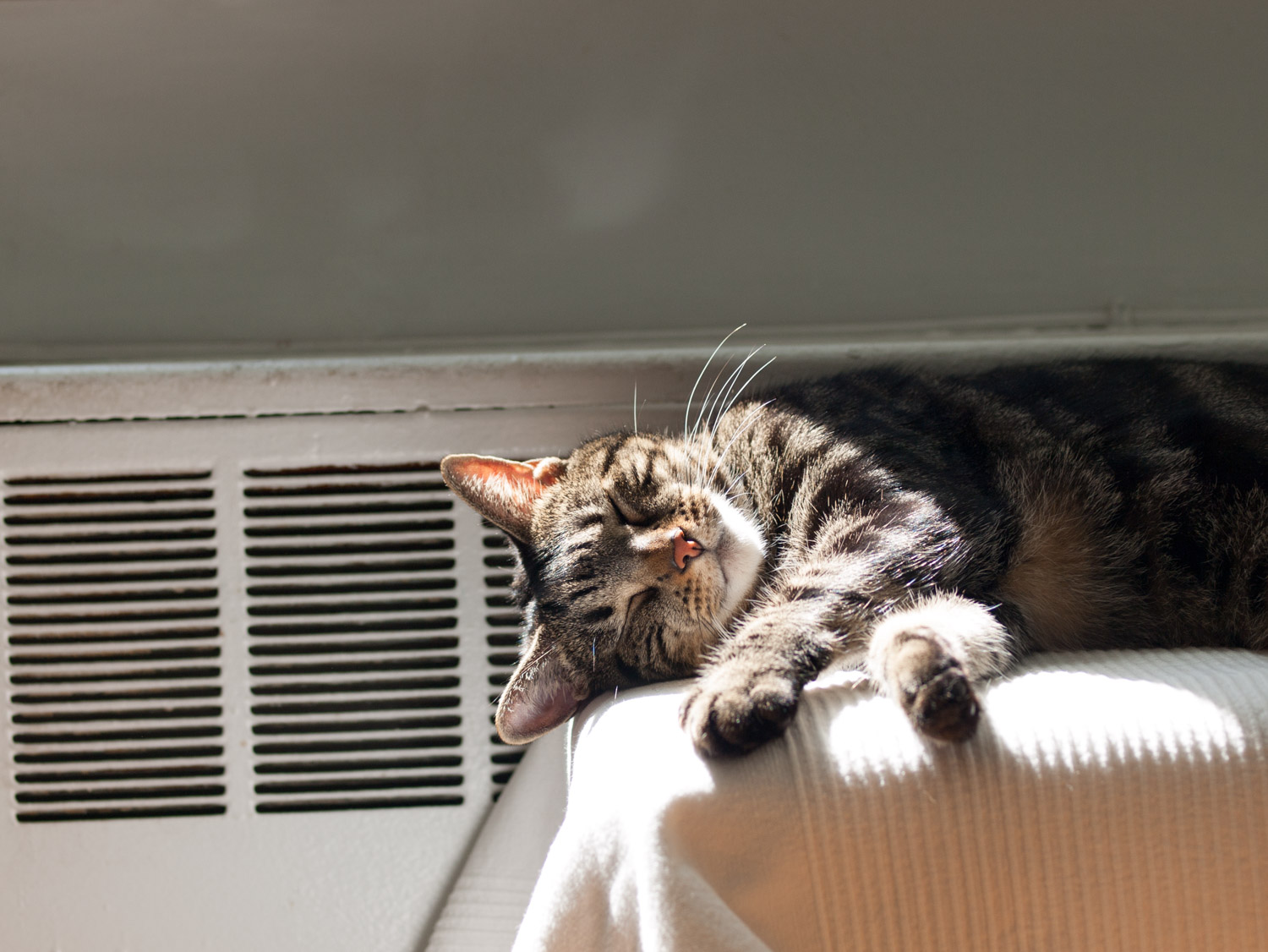 cat sleeping by radiator
